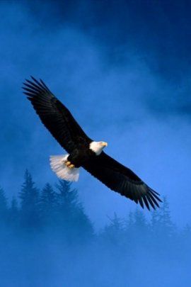 Free eagle (click to view)