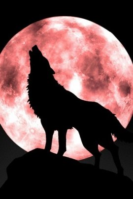 moon wolf (click to view)